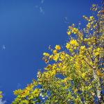 Jesen.