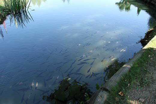 mozirski gaj - ribnik
