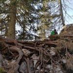 Pot na Pršivec prepredena s koreninami čudovitih dreves, ki kljubujejo ekstremnim vremenskim razmeram.