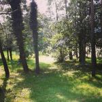 sprehod pod borovci - Mozirje